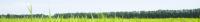 greenlandscape.jpg