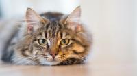 animal-cat-cute-126408-o.jpg