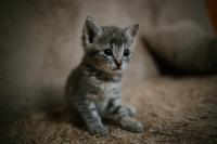 cat-ramiz-dedakovic-u4gwRbr2_j0-unsplash.jpg
