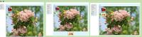 image-2020-05-29-11-21-38-289.png
